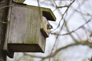 blue-tit-nest-box-daniel-challenger